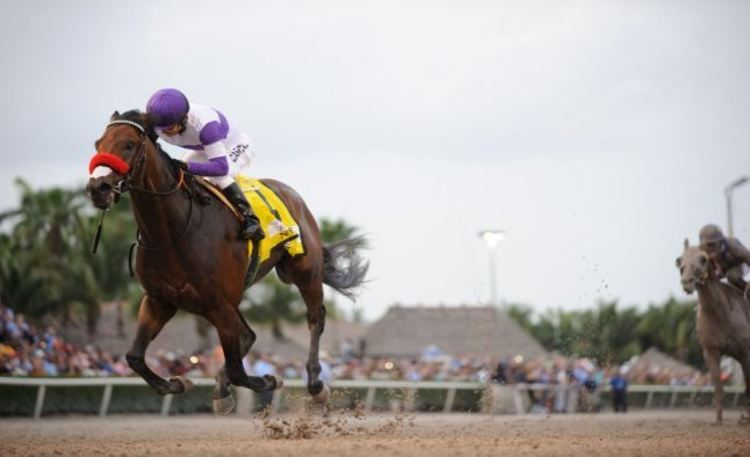 all horse racing college football bet picks