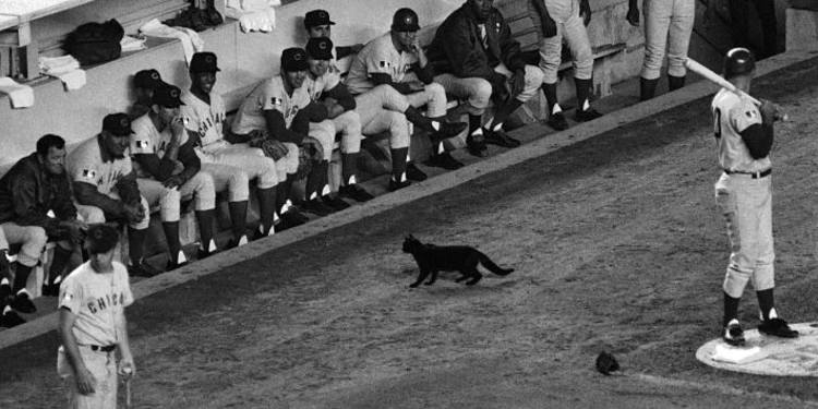 Chicago Cubs curse when black cat crossed field