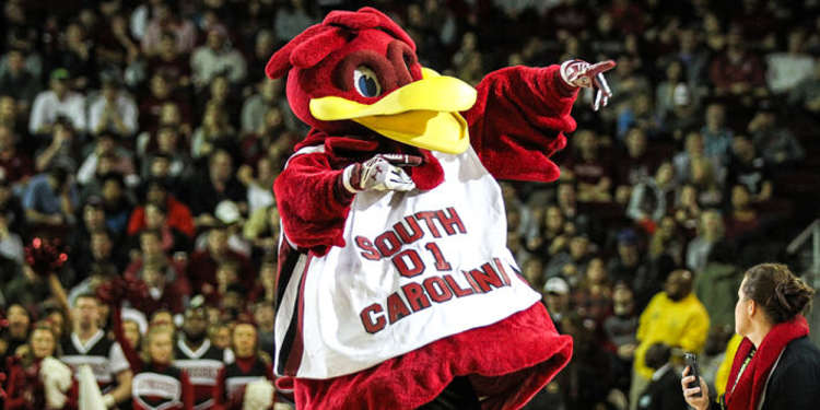 South Carolina Gamecocks mascot