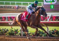 accelerate horse