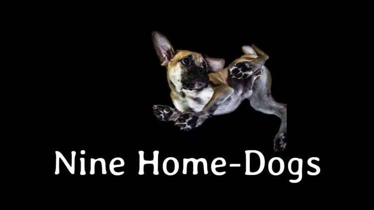 homedogs
