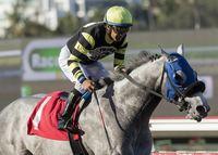 greyvitos horse